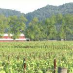 Sliante Wines spot -